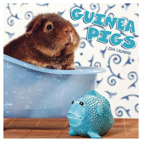 Guinea Pigs 2014 Wall Calendar