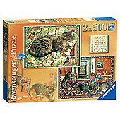 Cats 2x500