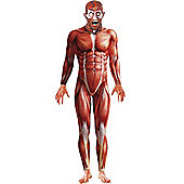 Anatomy Man Second Skin Suit - Adult Costume Size: 46-48