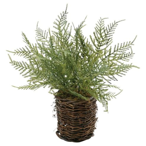 28cm Artificial Asparagus Fern In Twig Pot