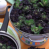 Brassica 'Petit Posy Mix'™ - 1 packet (30 seeds)
