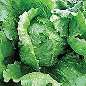 Lettuce 'Antartica' (Iceberg/Crisphead) - 1 packet (250 lettuce seeds)