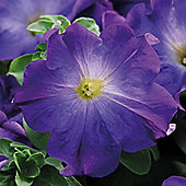 Petunia x hybrida 'Sophistica Blue Morn' F1 Hybrid - 1 packet (12 seeds)