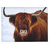 Highland Cow Canvas 50x37cm