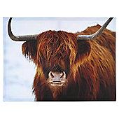 Highland Cow Canvas 50x37cm