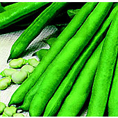 broad bean (broad bean 'Aquadulice Claudia')