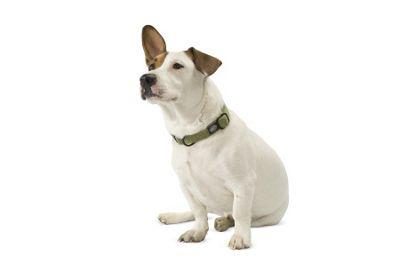 Planet Dog Cozy Hemp Medium Adjustable Dog Collar - Orange