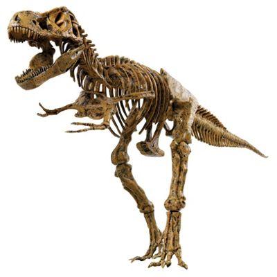 Edu T-Rex Skeleton Model