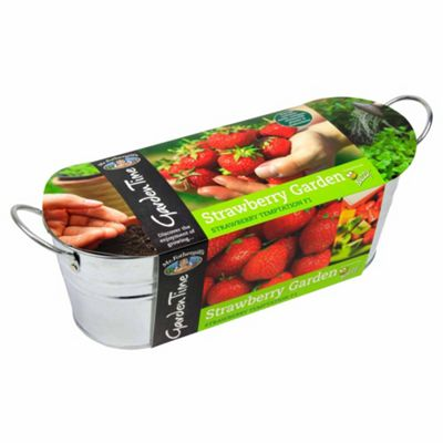Mr Fothergill's Strawberry Garden Windowsill Planter Kit