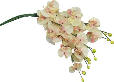Artificial Long Stem Orchid Flowers In Cream / Peach - 76cm - Bunch Of 6 Stems