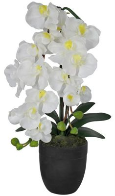 White Orchid Flower Display Small Ceramic Black Pot