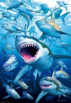 Shark Club - 500pc Puzzle