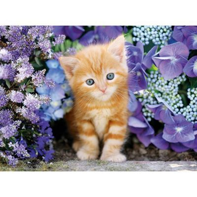 Ginger Cat in Flowers - 500pc Puzzle