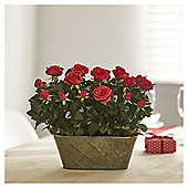 Duo Rose Planter