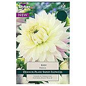 3x Dinner Plate Dahlia 'Kiev' Summer Flowering Bulbs