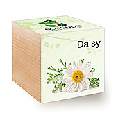 FeelGreen Grow Your Own BioDegradable EcoCube with Daisy Seeds 7.5 x 7.5 x 7.5 cm