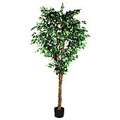 Parlane Tall / Large Artificial Ficus Tree Plant H1820mm x W1512mm Green