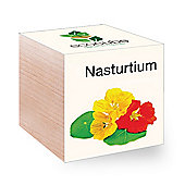 FeelGreen Grow Your Own BioDegradable EcoCube with Nasturtium Seeds 7.5 x 7.5 x 7.5 cm
