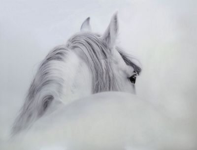 White & Grey Horse Tempered Glass Art Print