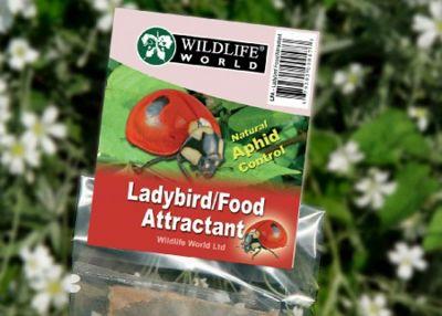 Wildlife World - Ladybird food/Attractant