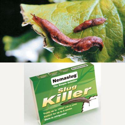 Natural Pest Control - Slugs - 1 large pack