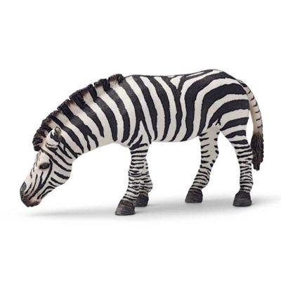 Zebra - Grazing