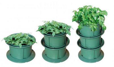 Potato Grow pot
