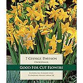 15 x Crocosmia 'George Davison' Bulbs - Perennial Yellow Montbretia Summer Flowers (Corms)