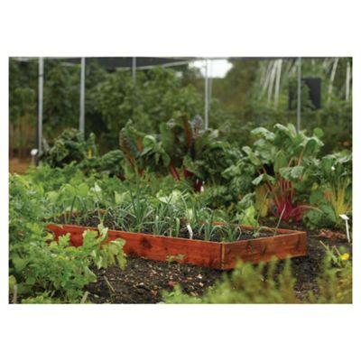 Rowlinson Vegetable Box