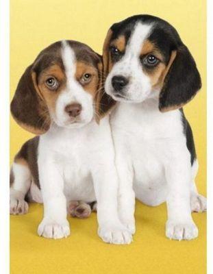 Beagles Puzzle