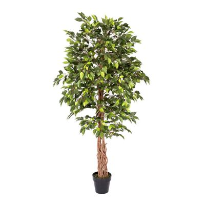 Homescapes Artificial Green Ficus Tree Replica Plant- 6 Feet