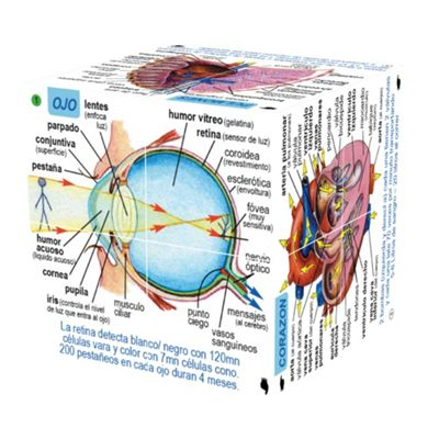 ZooBooKoo Spanish Human Body Systems & Statistics Cubebook - Fold-Out Cube