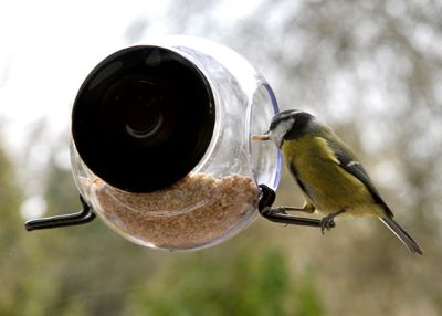 Sphere window bird feeder