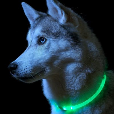 Auraglow One Size Fits All - LED Light Up Dog Collar High Visibility Flashing Safety Pet Leash - GREEN