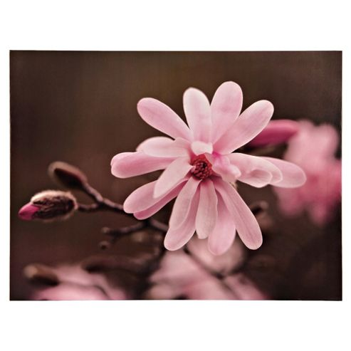 Blossom On Branch Canvas 60X80Cm