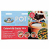 Mr Fothergill's Calendula Daisy Mix Flower Garden Plant Pot Topper