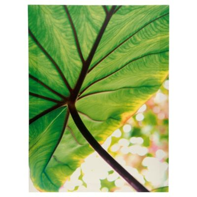 F&F home Retreat Floral Canvas