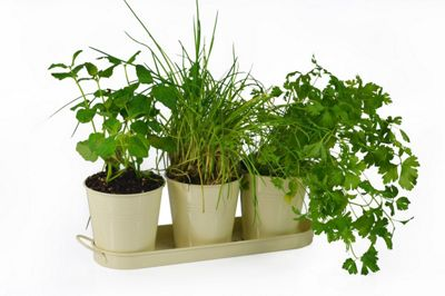 buy inside out grow your own herb kit including 3 herb. Black Bedroom Furniture Sets. Home Design Ideas