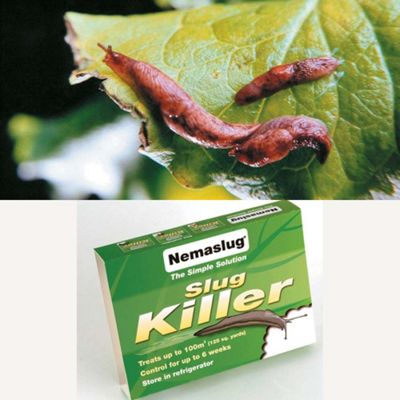 Natural Pest Control - Slugs - 1 small pack