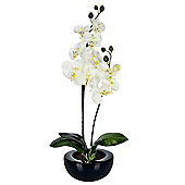 Homescapes Oriental Style Cream Orchids in Black Bowl