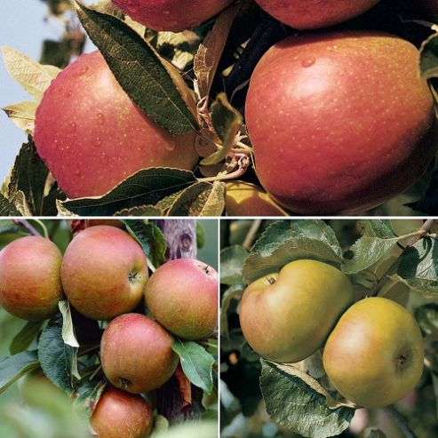 Apple (Britain's Favourites Collection) - 3 trees - 1 of each variety