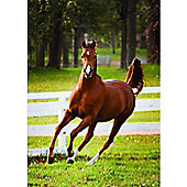 Foal Playing - 500pc Puzzle