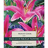 3 x Oriental 'Mount Cook' Lily Bulbs - Perennial Pink Summer Flowers