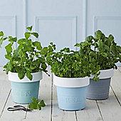 Set of Three Herb Pots