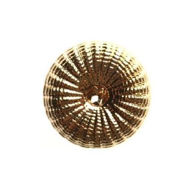Hemline Gold Shell Buttons 11.25mm 7pk