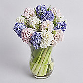 Mother's Day Hyacinth Abundance