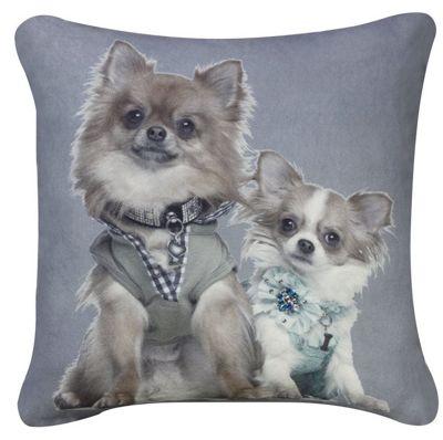 Blue Grey Cushion Pomeranian Dogs Portrait Photographic Style