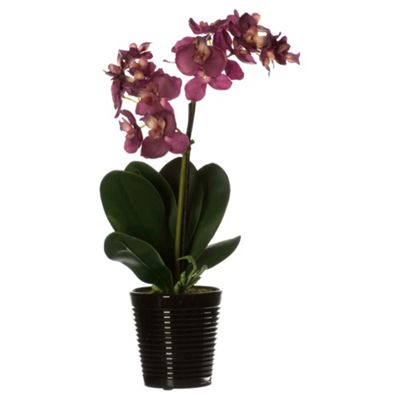 35Cm Real Touch Phalaenopsis In Black Ceramic Ribbed Pot - Fuschia
