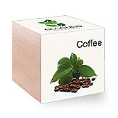 FeelGreen Grow Your Own BioDegradable EcoCube with Coffee Seeds 7.5 x 7.5 x 7.5 cm