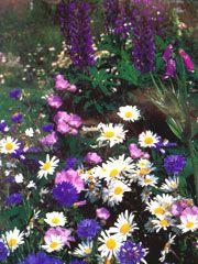 cottage garden collection (Cottage Garden collection)